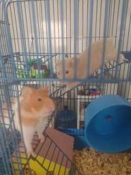 Título do anúncio: Vendo gaiola; casal de Hamsters e um filhote recém-nascido