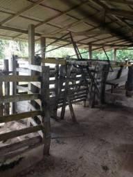 Fazenda 280 hec estruturada