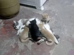 Doa -se filhotes de gato,pra quem realmente ama os animais