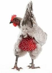 Fralda de galinha