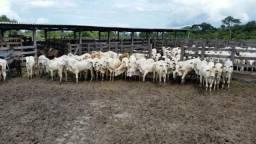 Fazenda em Zé Doca-Ma