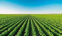 Fazenda arrenda-se com 1500 hectares de área útil em Boa Vista/RR, ler anuncio