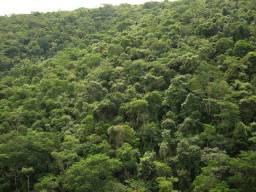 Mata para credito de carbono  800 mil hectares no Amazonas