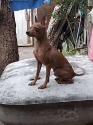 Cachorro tô querendo uma namorada