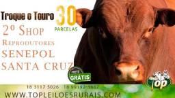 Top leiloes rurais oferta reprodutores senepol p.o. (frete free)