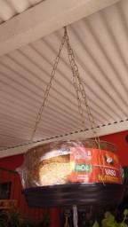 Planta caqueira de côco caqueira de fibra
