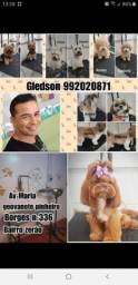 Pet do Gleydson