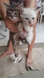 Doação de lindos gatinhos