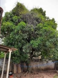 Corte e poda de árvores