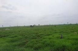 Vendo Fazenda Alto Pixuna ? Região de Humaitá/AM com 500 Hectares
