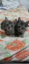 doando 2 lindos gatinhos filhotes