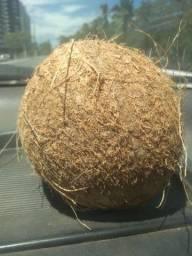 Título do anúncio: Coco seco grande