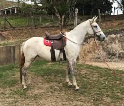 Vendo égua prenha mangalarga marchador