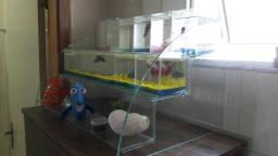 Vendo aquários para betas 130 reais