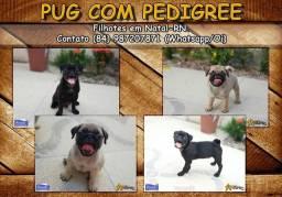 Pug abricot ou preto com pedigree e no padrão!