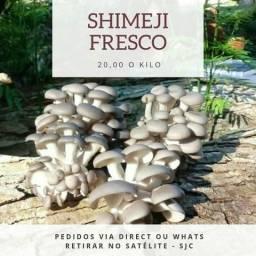 Shimeji in natura