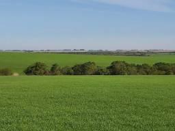 Fazenda 350 hectares Coxilhas