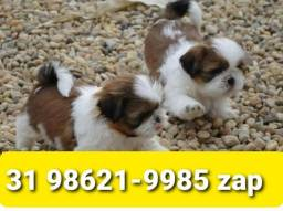 Título do anúncio: Cães Filhotes Belíssimos BH Shihtzu Poodle Maltês Basset Yorkshire Maltês