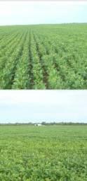 Título do anúncio: VENDA | Fazenda, em ZONA RURAL, Alto Boa Vista