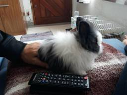 Coelho Teddy + gaiola