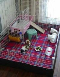 Procuro gaiola para roedores