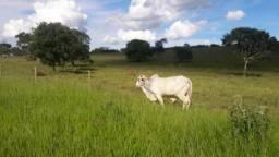 Fazenda 150 Ha Pitangui