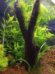 Tronco madeira Ypê para aquário