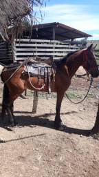 Cavalo potro MM