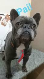 Último filhote de Bulldog francês disponível