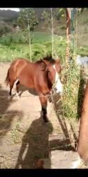 Cavalo manso de esteira