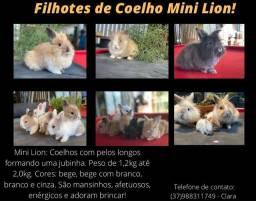Coelho mini Lion