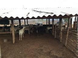 Vendo Fazenda Em Curimata Piauí Porteira Fehada