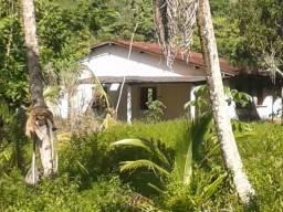 Fazenda Mutum com 572 hectares