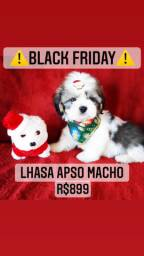 Black friday!! Lhasa Apso R$899