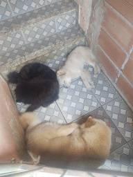 Estou doando esses 3 cachorro pra quem tenha responsabilidade