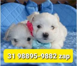 Título do anúncio: Canil Premium Filhotes Cães BH Maltês Poodle Yorkshire Shihtzu Lhasa Basset