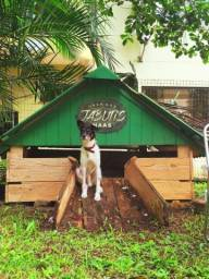 Cachorro super inteligente e dócil - Adoção