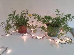 Vende-se plantas de  diferente espécies