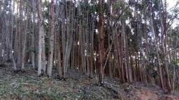Venda de eucalipto