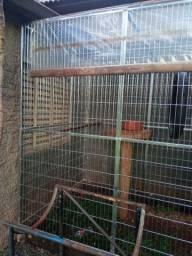 Viveiro para aves araras tucanos papagaio