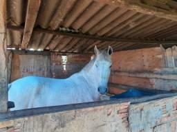 Vende se um cavalo