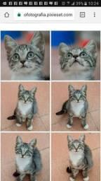 Adoção de gata filhote, castração gratuita, fiv/felv negativo
