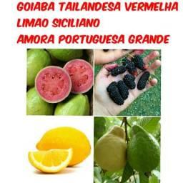 Varias mudas frutiferas