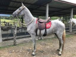 Vendo égua Mangalarga Marchador registrada