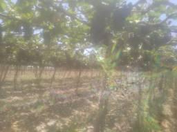 Vende se terreno pra chácara na samanbaia