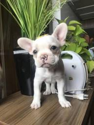 Filhote Bulldog Francês fêmea