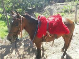 Vendo égua Paraguaia