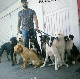 Reabilitação e adestramento canino k9