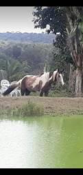 Égua (Poutra) Paint Horse