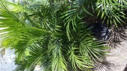 Plantas e grama